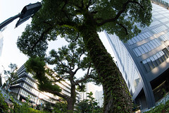 Trees (nak.viognier) Tags: tree nakanoshima osaka   olympusepl3 lumixgfisheye8mmf35