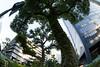 Trees (nak.viognier) Tags: tree nakanoshima osaka 樹 中之島 olympusepl3 lumixgfisheye8mmf35