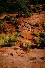 Cathedral Rock, Sedona, Arizona (saucemania) Tags: nikond7000 nikon35mmf18gafsdx arizona sedona roadtrip cathedralrock