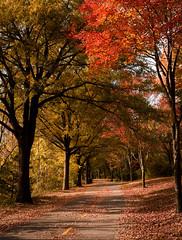 Autumn Path (Geoff Livingston) Tags: holmesrun alexandria autumn leaves pike path peak foliage fall emotion soft light feeling