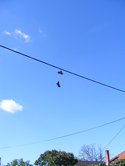 Walking the tight rope???? Summer in Petrinja Croatia: 2016 (seanfderry-studenna) Tags: summer petrinja croatia hrvatska 2016 august september outdoor outside balkans balkan europe eu european blue sky white clouds vapour trails nature natural man made hot warm shoes trainers sneakers laces old cable wire hang hanging lost
