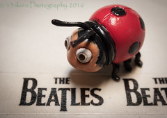 This or That (HMM) (13skies) Tags: thebeatles beetle macromondaybeatlesbeetles close song theme macromondays macroscopic playing fun idea ladybug ladybirdbeetle youth singing dance