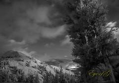 Bristle Cone Pine @ 11,000'.jpg (Eye of G Photography) Tags: trees usa monolaketrip sunrise infrared northamerica bristleconepine skyclouds sunsetsunrise inyoforrest places california