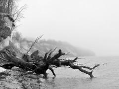 tief gefallen (Wunderlich, Olga) Tags: ostsee sassnitz rgen insel mecklenburgvorpommern bau steilkste steilufer steine sand kreide landschaft landscape natur naturfoto