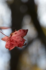 don't let go (courtney065) Tags: nikond600 nature landscapes trees bokeh depthoffield artistic abstract leaf foliage flora