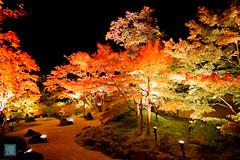 Tohoku 2016 - 505 (西文 Simon) Tags: 日本東北 miyagigun miyagiken 日本