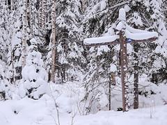 National Park Koli - Finland (Sami Niemelinen (instagram: santtujns)) Tags: koli suomi finland kansallispuisto national park mets forest talvi winter lumi snow puu tree patikka retkeily hiking trekking luonto nature maisema landscape pohjois karjala north carelia lieksa viitta