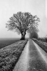 (salparadise666) Tags: moskva 2 industar 23 fuji neopan acros 100 400asa caffenol rs 15min nilsvolkmer monochrome landscape nature calenberger land niedersachsen region hannover germany tree black white