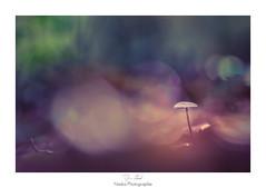 Rve veill (Naska Photographie) Tags: naska photographie photo photographe paysage proxy proxyphoto macro macrophotographie macrophoto nature forest foret champignon dream reve mushroom color couleur bokeh rose pink flare imaginaire imaginarium
