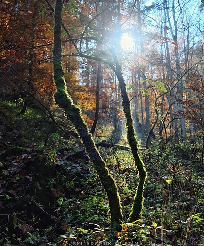 When your soul is green 🌳💚 #vsco #wildme #liveauthentic #createexploretakeover  #letsgosomewhere #openmyworld #freedomthinkers #wanderlust #natureaddict  #visualsoflife #stayandwander #slowliving #bandofun #abmlifeiscolorful #my