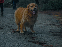 Tura (rooger96) Tags: scene landscape dog forest walk cloudy day sunday morning photo photography pretty beautiful
