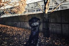 Battersea Park 1 (katarzynaadamczyk) Tags: battersea park london west autumn canon tokina1116
