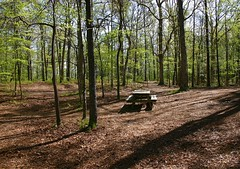~ Oh Lonesome Me .... (~ Cindy~) Tags: spring woods picnic area ga april2014 county dekalb trees woodsy picnictable mountain stone