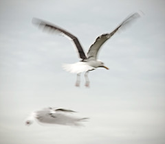 _DSC8570 (Alex Pezeshkmehr) Tags: sea motion blur birds wings long exposure flight