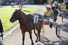 A day at the races (ElBroka bicicletea por Auckland) Tags: newzealand horses march racing auckland nz harness marzo alexandrapark 2013 canon24105mmf4 canon6d tagsadded