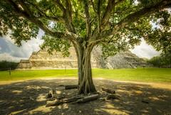 Las raíces de todos los árboles (anwarvazquez) Tags: canon yucatan ruina yucatán julio vacaciones hdr antiguo piramide elcastillo anwar chichenitzá 2013 canont2i anwarvazquez