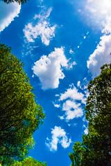 Pinares de Puerto Real - 4 (cives-expat) Tags: españa árboles paisaje pinos puertoreal