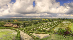 Jatiluwih (Fil.ippo) Tags: bali panorama field indonesia landscape nikon rice paddy unesco filippo paesaggio riceterrace risaia sigma1020 jatiluwih d7000 filippobianchi