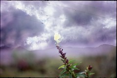 poor & free (bensn) Tags: sky mountains flower mamiya film lines japan clouds 50mm pentax slide velvia 100 f2 hakuba nagano lx multiexposure sekor