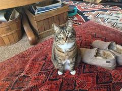 My cat with a couple of Old Friends. (blackthorne56) Tags: old friends cat slippers