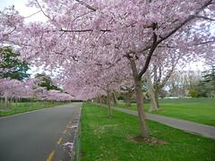Victoria Esplanade Gardens (Graham 1947) Tags: nz northisland palmerstonnorth