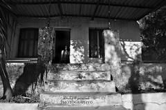 welcome home... (Dimitra Kirgiannaki search engine the whole spring) Tags: windows light blackandwhite house abandoned monochrome stairs photoshop photography ruins doors shadows decay fear photographers creepy spooky greece ghosts attica dimitra vouliagmeni kavouri phantasmata mygearandme nikond3100 kirgiannaki