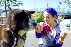 Akita Dog, Taro and Dog-lover Lady (Dakiny) Tags: park autumn dog animal animals japan mammal photo october sony snapshot cybershot snap photograph yokohama   akita  taro    carlzeiss 10   tstar 2013 akitadog  rx100   petanimal japaneseakita aobaku carlzeisslens   japandog     2013  dscrx100  sonycybershotdscrx100  shimoyamotocho yamotopark  bariozona t