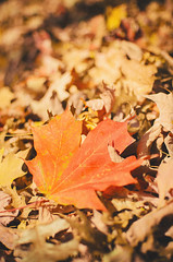 autumn (brian tober) Tags: autumn orange fall leave colors leaves seasons grain