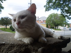 Mystic (universalcatfanatic) Tags: road street trees sky cats white house tree green eye cars grass leaves car cat out concrete outside grey leaf eyes traffic side gray cement front hydro porch mystic poll lay laying