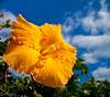 (Querbi photo,Thanks for all the faves and comments) Tags: flowersarebeautiful excellentsflowers natureselegantshots mimamorflowers flickrflorescloseupmacros thebestofmimamorsgroups magicmomentsinyourlifelevel1 onlythebestofflickr nature'splus