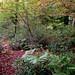 Fotos Asturias: bosque de Pome