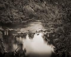Down River (josesuro) Tags: bw film tampa landscapes florida fineart 4x5 largeformat hillsboroughriver 2013 fineartweb ebonysv45ti jaspcphotography josesuro