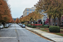 Untitled (Reed Lewis ATL) Tags: road street autumn trees tree fall ga georgia pavement sidewalk lined alpharetta