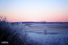 the place I want to be (ankina) Tags: morning nature norway sunrise canon landscape dawn frost ullensaker klfta