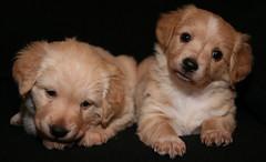 IMG_2278 (Pedro Montesinos Nieto) Tags: dog perro cachorros fragile mascotas miradas laedaddelainocencia frágiles