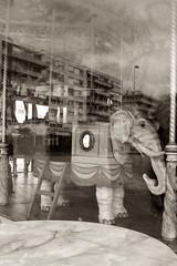 White elephant carroussel ( ...... ( Alicia G. )) Tags: old bw white elephant france blanco feria nostalgia nostalgic past viejo elefante limoges carrusel carroussel pasado
