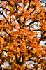King of Autumn (Jeff Clow) Tags: autumn abstract tree fall nature dallas texas seasons digitalart dfw photoartwork ©jeffrclow