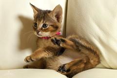 Какие болезни бывают у домашних животных?