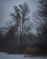 Snow, Fog (Sunset Noir) Tags: winter snow nature weather fog ma scape newton