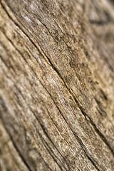 #7 (Alberto.C.77) Tags: macro alberi nikon italia natura 90mm inverno venezia giulia friuli dettaglio 2014 d3100