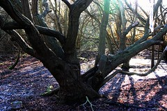 Tree Trunk (Morgan Riddiford) Tags: light shadow tree intense colours escape shine purple angle bright ground fresh land shimmer shaded
