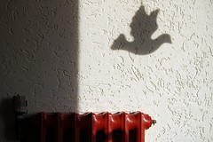 Peace Bird in the hall (erix!) Tags: shadow bird wall dove heating ef peacebird