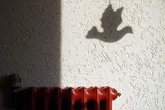 Peace Bird in the hall (erix!) Tags: shadow bird wall dove heating ef peacebird