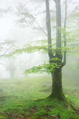 (Mimadeo) Tags: morning trees light sunlight mist green nature wet leaves misty fog mystery forest landscape leaf spring haze branch gloomy natural magic foggy foliage fairy fantasy bark ethereal mysterious trunk mystical unreal hazy magical murky beech