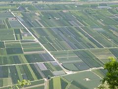 Das Unterland - La bassa atesina (sangiovese) Tags: south corona alto apfel tyrol sdtirol mela adige graun monocultura cortaccia unterland kurtatsch monokultur