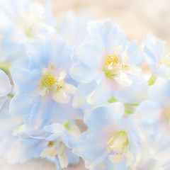 pale and faded delphiniums (photoart33) Tags: blue summer flower art square soft pretty pastel blurred pale delphinium persephonesgarden