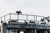 _DSC3138 (marilynwe) Tags: 2016 edmonds washington ferrylanding kingston sunrise water ferry