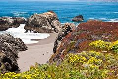 693 coast LR (bradleybennett) Tags: water river ocean stream creek beach shore shoreline line coast tide ice plant iceplant