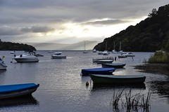Inversnaid to Balmaha trip (Anne Young2014) Tags: lochlomond evening yachts boats sailing scotland balmaha