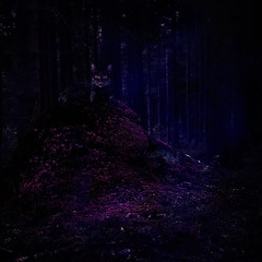 Half way to Anywhere (EmmaAndersson) Tags: surreal photography surrealism fantasy imagination dream dreamy color purple blue contrast fairytale lewis carrol cheshire cat wonderlandaliceinwonderland dark darkart fineartphotography fine art fineart texture dreams cats storytelling dreamlike